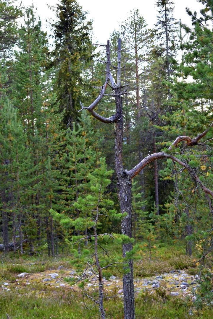 A reindeer tree
